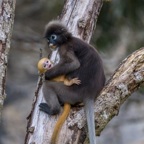 Młodzi Odkrywcy w Tajlandii - małpki na Tonsai