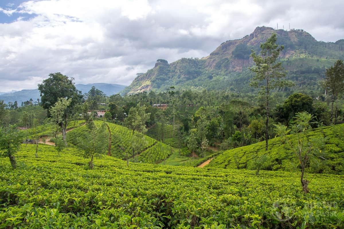 Młodzi Odkrywcy Sri Lanka