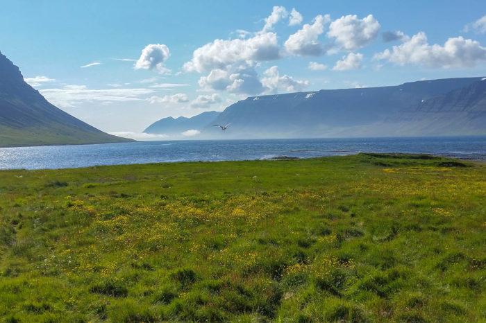 Islandia – Fiordy Zachodnie