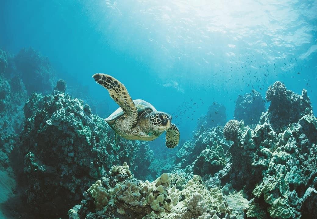 Malediwy - snorkelling zżółwiami