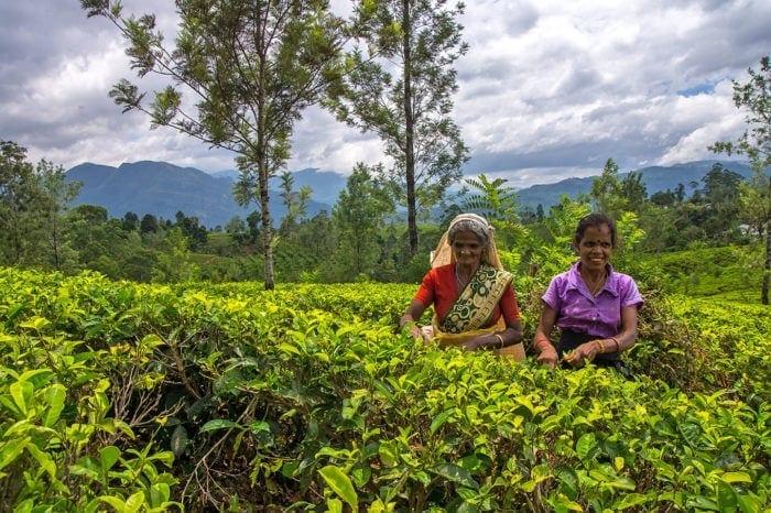 Sri Lanka – raj 5 stopni od równika
