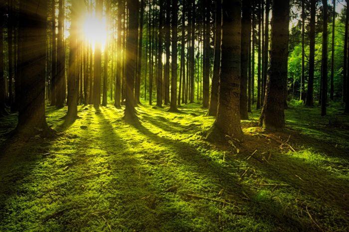 Dzień Ziemi – Czas na las!