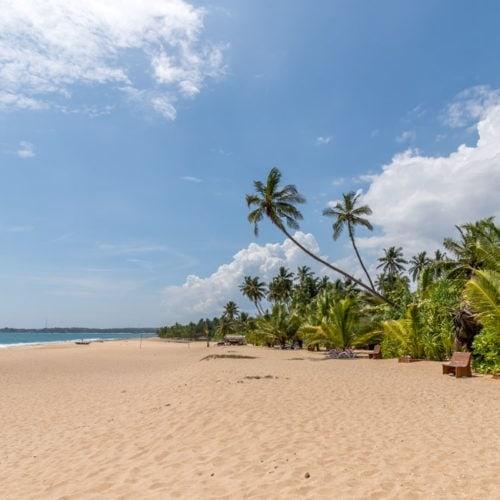 Sri Lanka plaża i palmy