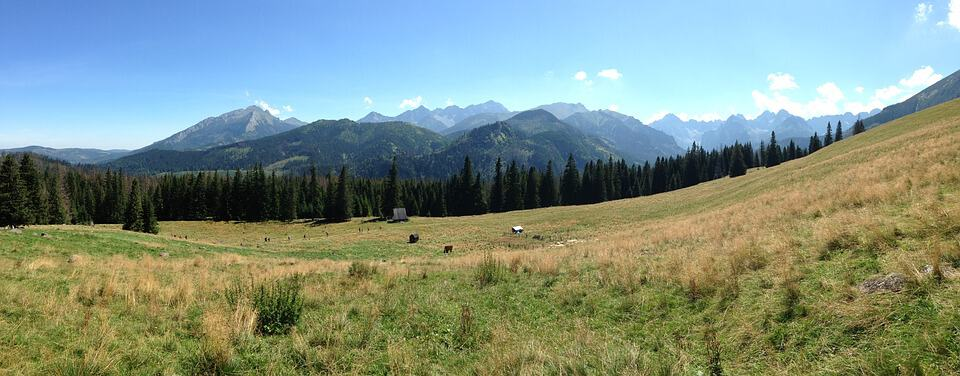 monumentalny widok rusinowej polany