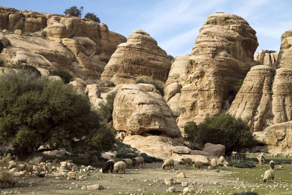 Rezerwat Dana wJordanii