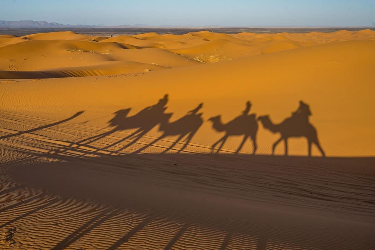 Maroko - pustynia, cienie wielbłądów