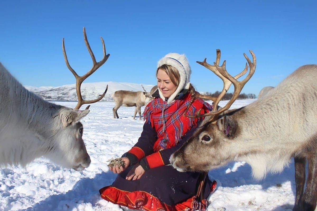Karmienie reniferów wokolicach Tromso, Norwegia