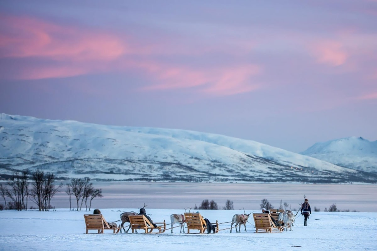 Kulig zreniferami wokolicach Tromso