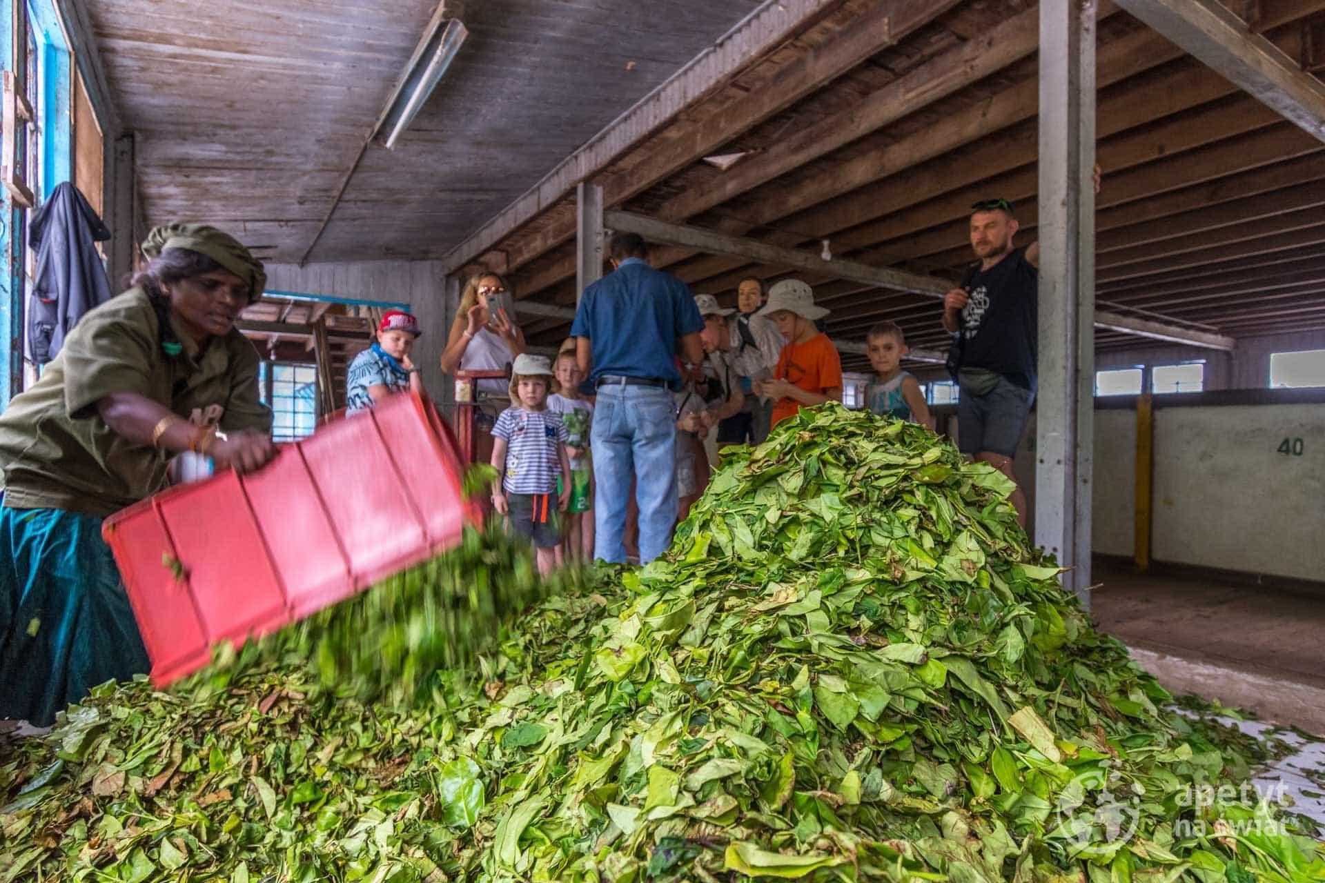 Fabryka herbaty naSri Lance
