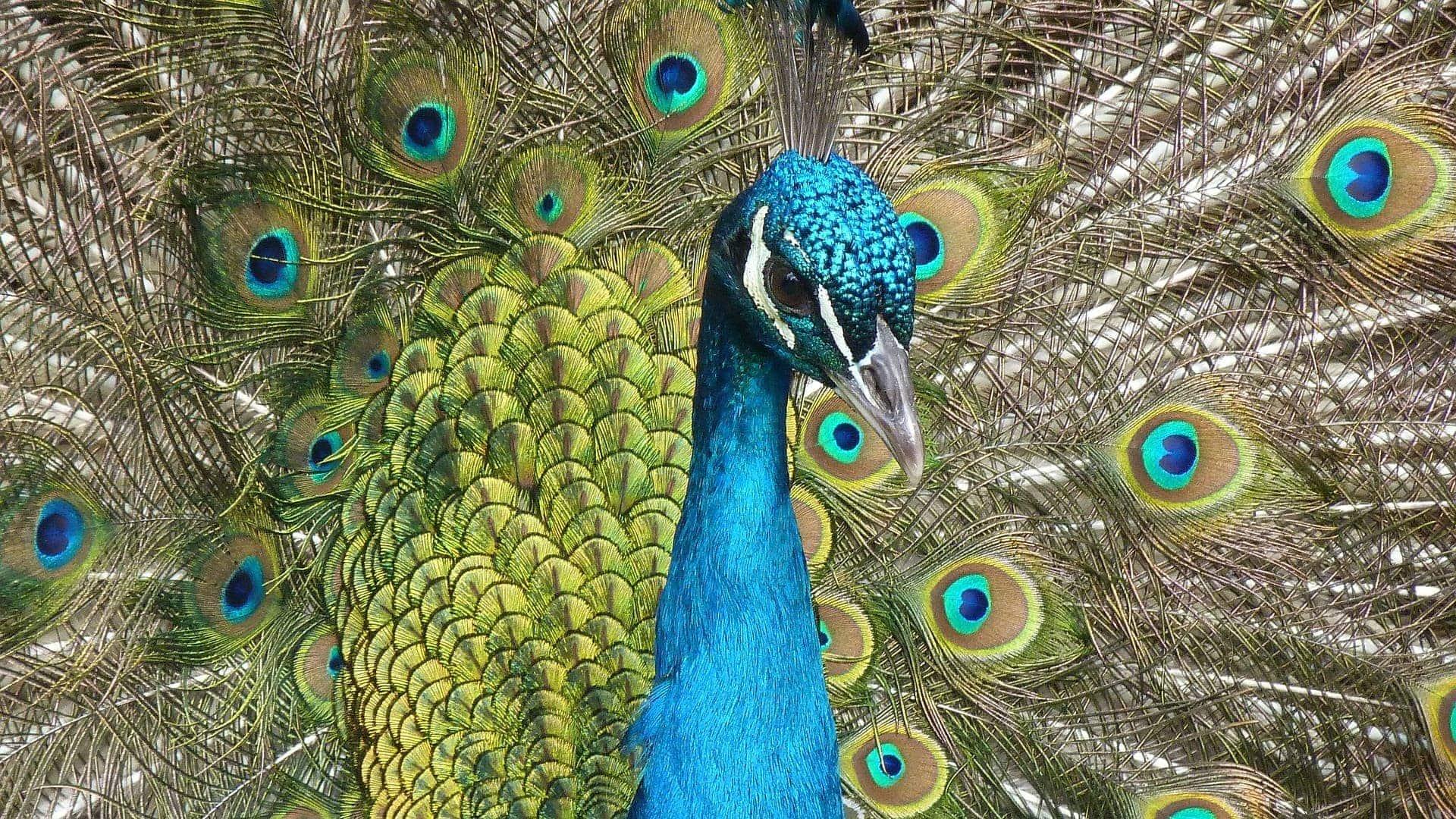 Kuala Lumpur Bird Park - paw