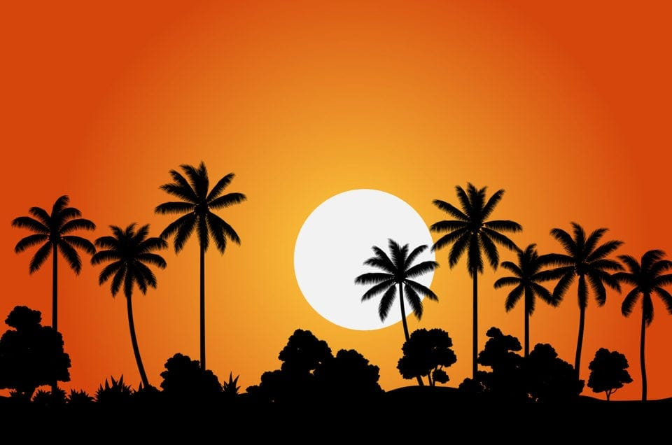 Czarne palmy na tle pomarańczowego nieba i zachodzącego słońca