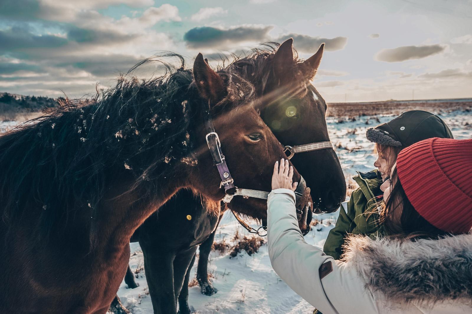 Mama idziecko głaszczące konia, zimowa aura, kulig