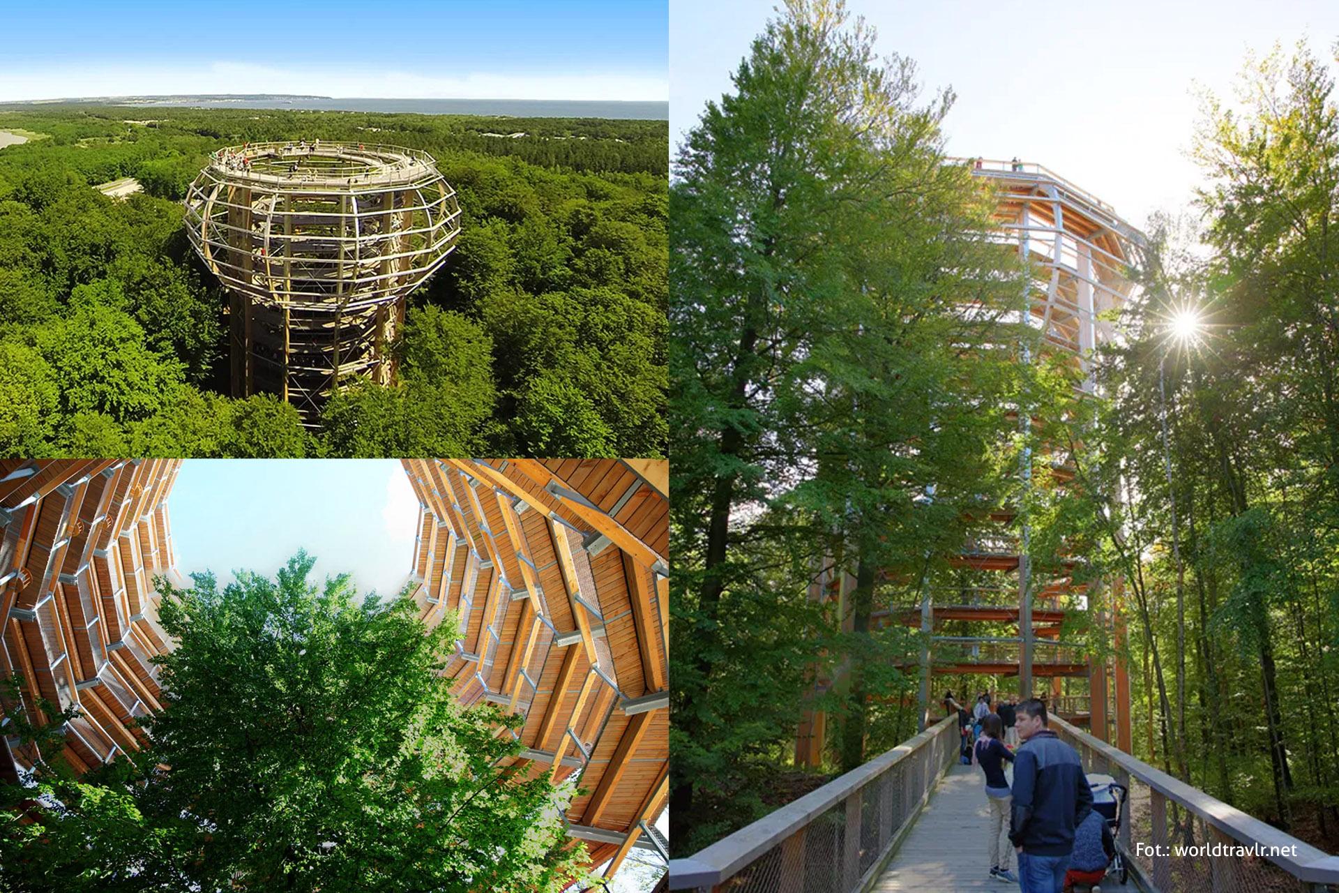 Wyspa Rugia, Tree Top Walk, wycieczka naRugię, spacer wkoronie drzew