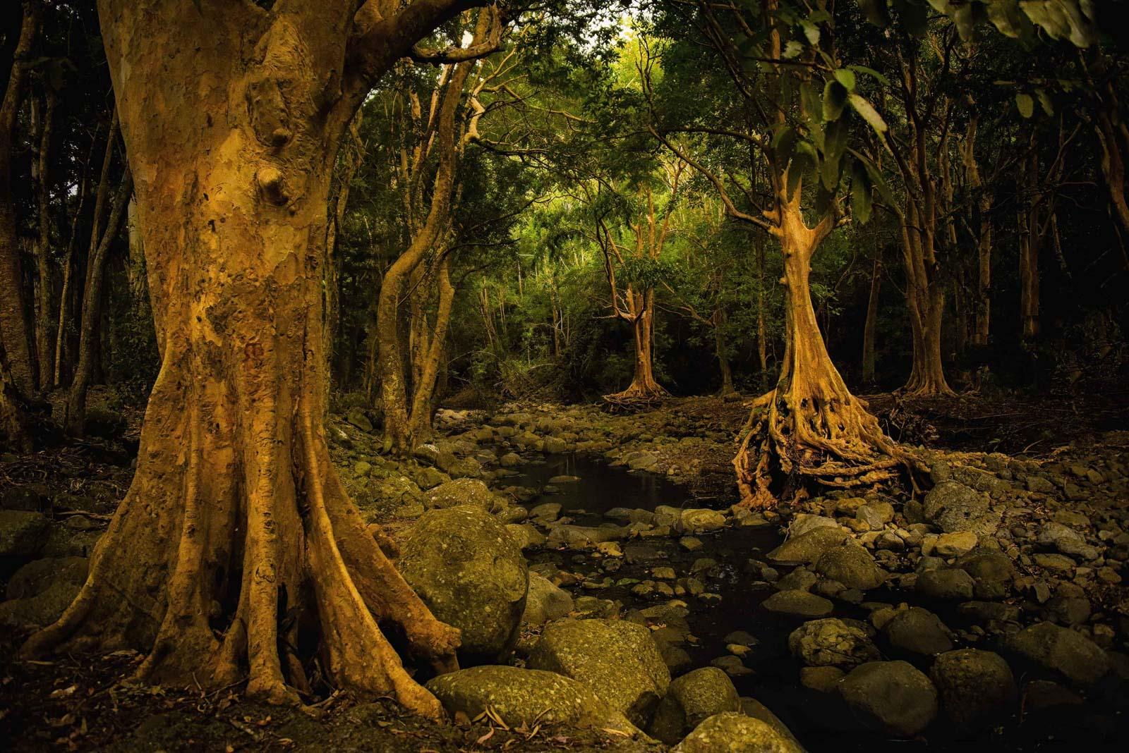 Black River Gorges - niesamowite drzewa