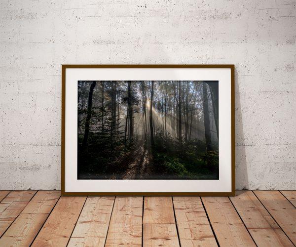 Plakat las o poranku w Bieszczadach