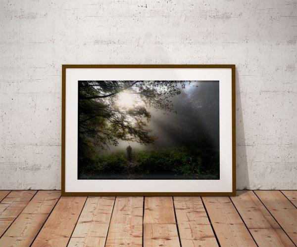 Plakat mglisty las w Bieszczadach