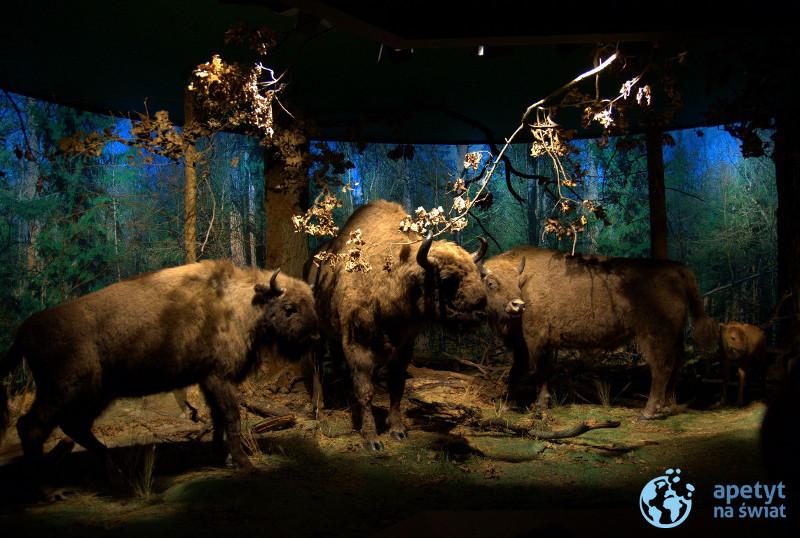 Muzeum Przyrodniczo-Leśne Białowieskiego Parku Narodowego